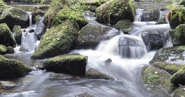 Wasser – die Quelle des Lebens seit Anbeginn der Zeit